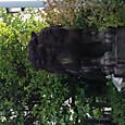 京都須賀神社(なぜか横むきの配置に、、